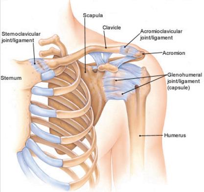why does my collar bone hurt
